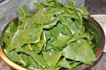 Green Swiss Chard